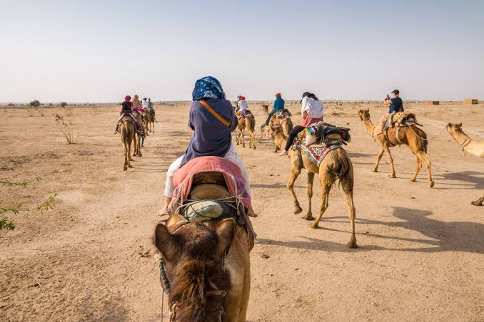 camel safariin rajasthan