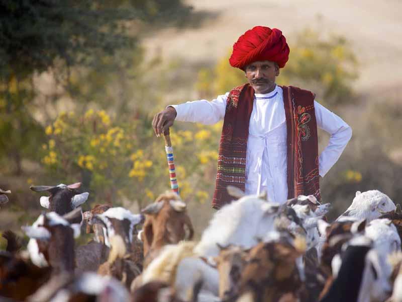 Rajasthan off beat odyssey