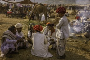 Rajasthan With Pushkar Camel Fair Tour