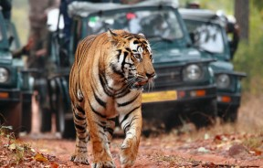 Ranthambhor Wildlife Travel Package
